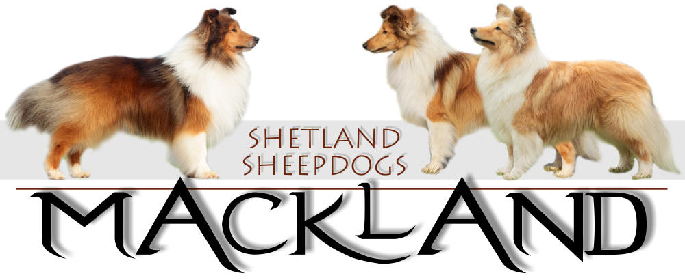 Mackland shetland sheepdogs shelties puppies South Africa